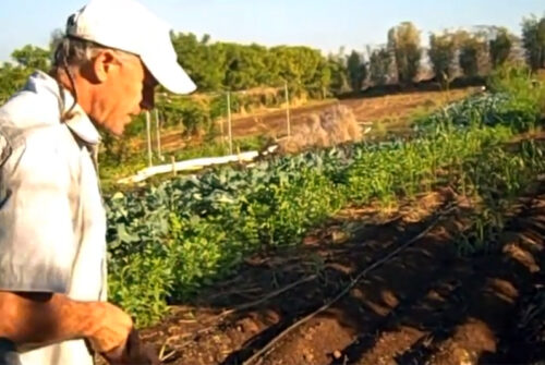 Cover Crops & Fungus